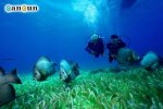 Scuba diving in Cancun