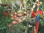 Macaws and Flamingos in Xcaret